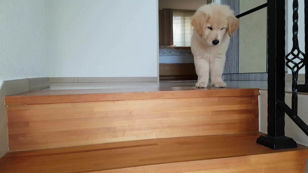 Как сделать лестницу нескользкой?